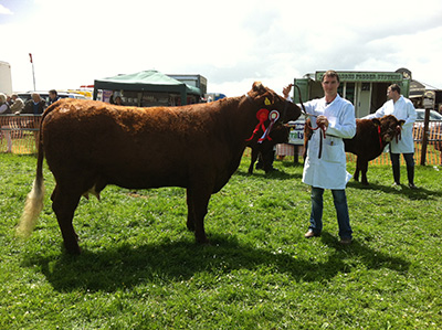 Athlone Show Reserve Champion Clew Bay Kate with owner Declan Bell