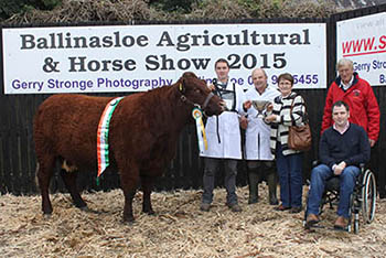 Cow Champion 2015 Clewbay Kate Declan Bell1