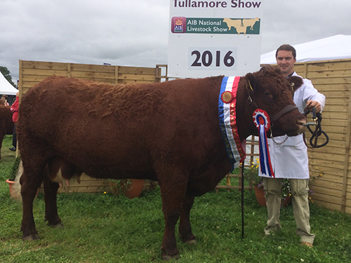 Tullamore 2016 Champion, Clew Bay Kate owner Declan Bell