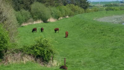 grazing bank